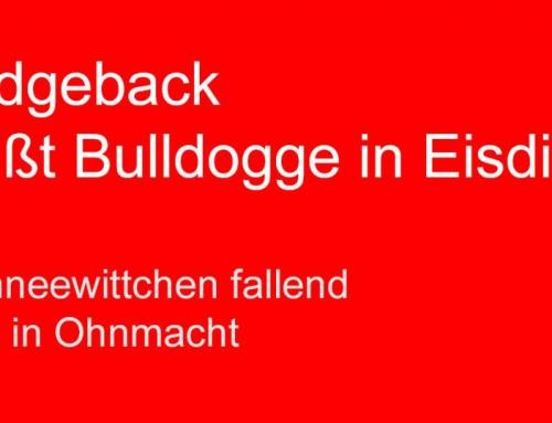 Ridgeback reißt Bulldogge