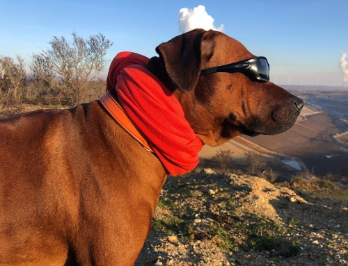 Hunde-Toll-Haus statt Modehaus
